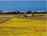 봄 향기 가득한 청정자연의 소비뇽 블랑