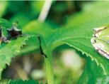 개구리 특성의 멋진 응용
