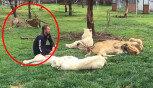 사육사 공격하는 표범을 막은 호랑이