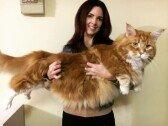 """""""믿을 수 없어!""""… '몸길이 1.19m' 고양이, 기네스 오를까"""
