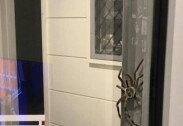"""""""합성 아닙니다""""… 초대형 거미 발견, '믿을 수 없는 크기'"""