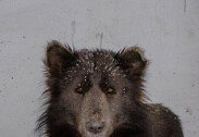 '얼굴은 곰, 몸통은 개'…인간의 욕심으로 탄생한 동물