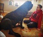"""건장한 성인 남성보다 큰 강아지…""""보고도 믿을 수 없는 크기"""""""