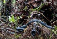 위장한 스나이퍼 총기 위로 지나가는 뱀 포착 '이럴수가!'