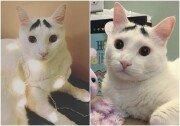 독특한 눈썹 가진 고양이, SNS 인기 스타 등극