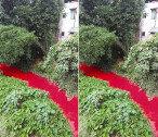 핏물처럼 붉게 변해버린 강물…당국, 조사해봤더니