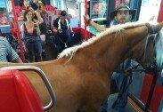 말을 기차에 태우려던 관광객, 결국 탑승 거부 당해