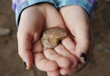 흙장난하던 7세 소녀, 6500만년 전 화석 발견
