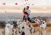 16마리 강아지와 함께한 로맨틱 프러포즈