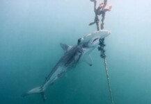 상어 개체수 90% 감소… 알고 보니 '황당한 이유'