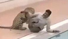 사람 공격하는 표범…학교 담장 넘어 침입