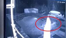 수영장에 나타난 악어…여자 남기고 남자는 도망?
