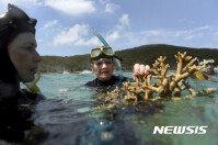 온난화의 저주? 호주 대산호초 3분의 1 사실상 폐사