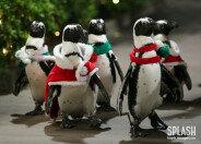 펭귄에게 옷 입히고… 크리스마스 준비하는 수족관