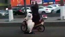 스쿠터(전동 퀵보드)를 타는 강아지…정말?