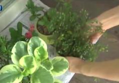 노년 여성, '화초 돌보면' 건강에 도움