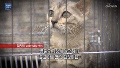 국정 감사장에 나타난 고양이