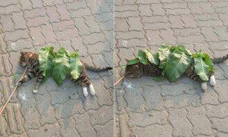 """""""감기 걸릴까봐""""… 고양이에 '나뭇잎 이불' 덮어준 아이"""