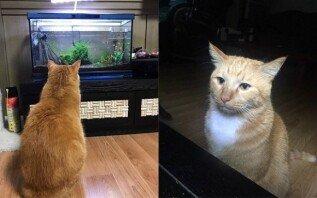 """""""빠.져.든.다""""… 수족관 보다 '밤새운' 고양이"""