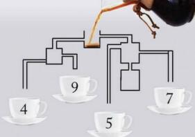 """""""잘~ 봐야합니다""""… 누가 첫 번째로 커피를 마실 수 있나요?"""