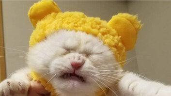 """""""우리 아들, 노란색 옷 입혀봤는데 펑펑 우네요"""""""