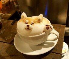 '카푸치노 코기', 마실 수 있으신가요?