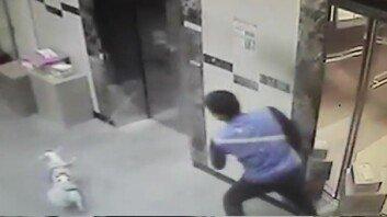 엘리베이터에 목줄 걸리자…빠른 판단으로 '강아지 살린' 택배기사