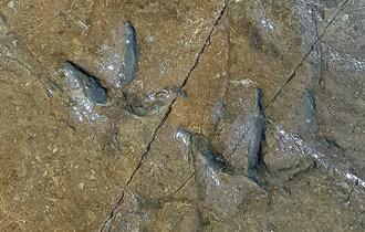 """在""""蔚州大谷台盘龟台岩画""""周边新发现30个恐龙脚印化石"""