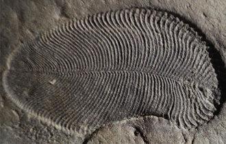 5.58亿年前,最古老的多细胞动物化石被发现