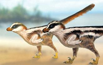 """世界上最小的""""猛禽""""恐龍的腳印化石在韓國被發現"""