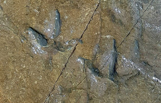 Some 30 fossilized dinosaur footprints found near stone carving