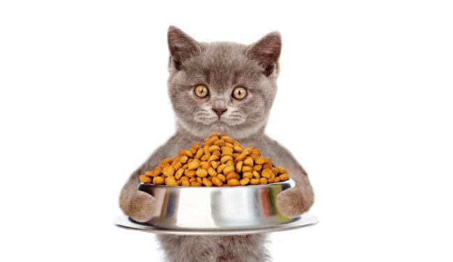 사람도 고양이도 마찬가지 비만일 땐 다이어트 필수!