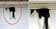 차고 문에 낀 고양이, 구조후 살펴보니…