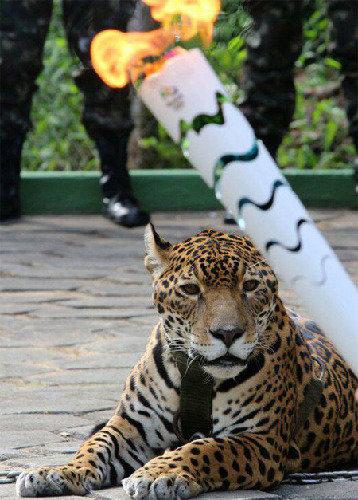 巴西里约奥运会深陷吉祥物