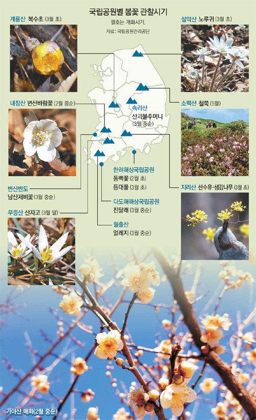 3月智异山山茱萸、4月俗离山樱花,来一场春日赏花之旅吧!