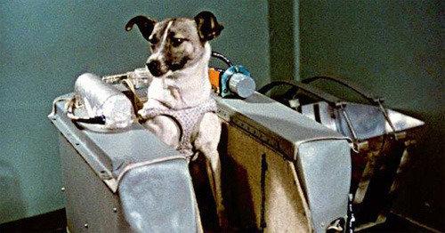 """世界上最早的动物宇航员""""莱卡""""飞向太空  以狗和猴子为主的实验动物"""