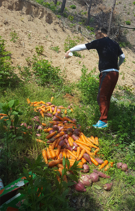 Okcheon County offers feed to wild boars in pilot test to cut damage
