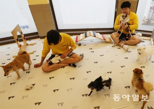 No vacancy in pet hotels during Chuseok holidays