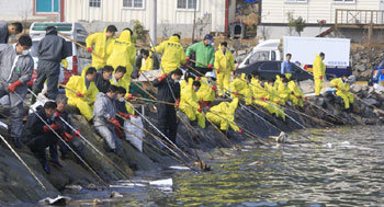 Cleaning up oil spills