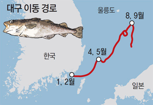 鎭海湾で卵を生み、東海で夏を過ごして戻ってくる タラの生息環境が明らかに