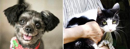 文大統領が遺棄犬「トリ」を養子縁組へ