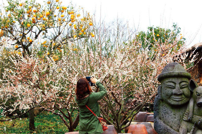 千의色 제주의 봄