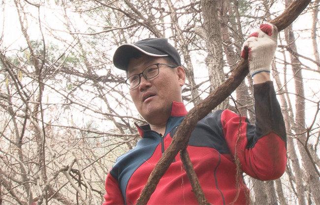 소나무 휘감은 약초 송담, 중국 황제 보양식 당나귀