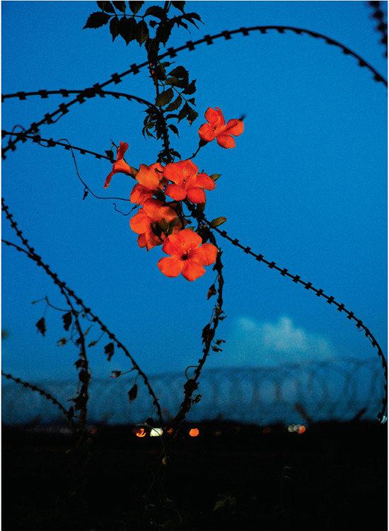 생명의 땅 DMZ