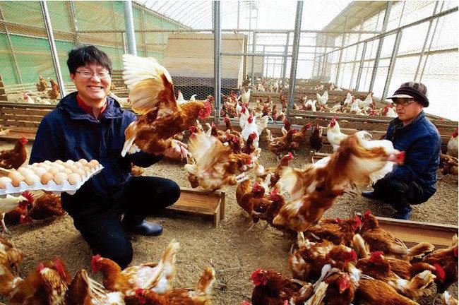 자연방사 친환경 닭