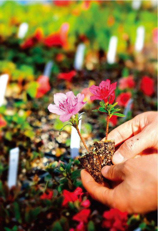 향기를 몰고 온 봄꽃