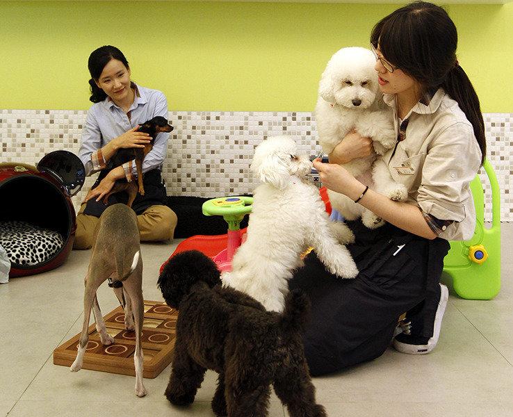 늘어나는 펫팸(Pet+Family)족  펫코노미(Pet+Economy)를 선점하라