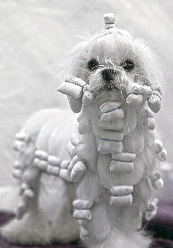 세상에 사랑스럽지 않은 개는 없다