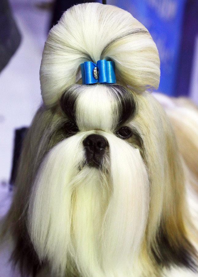 사랑스럽지 않은 개는 없다