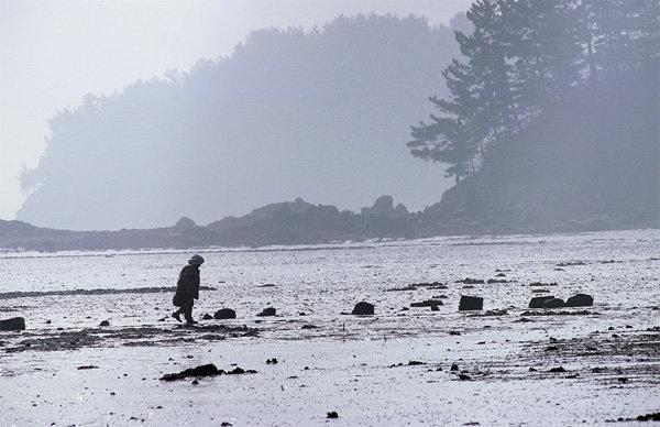 아름다운 해변, 드넓은 개펄, 해송(海松)의 향연